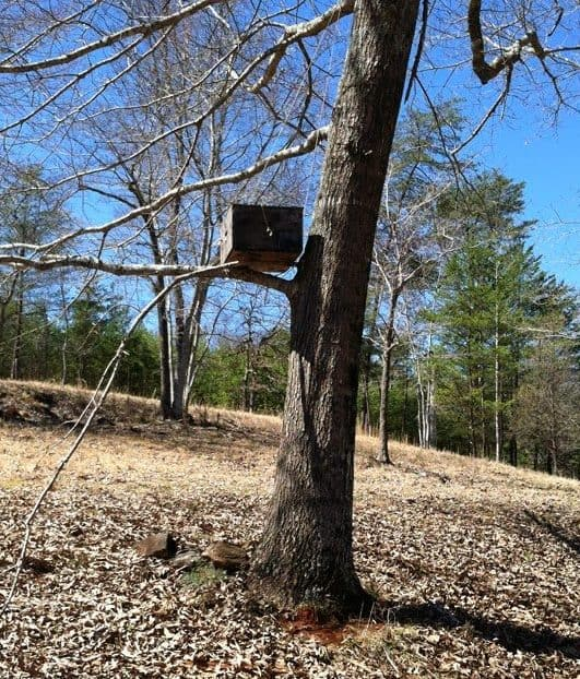 swarm trap or bait hive in a tree