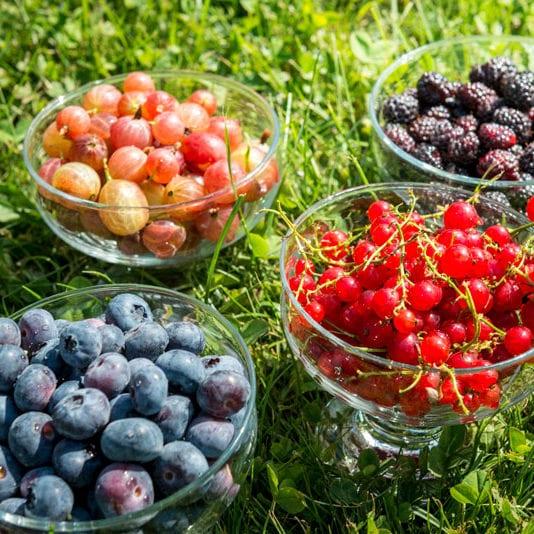 Mirtilli, Ribes, More, Uva Spina - Il Piccolo Frutto di Chiara