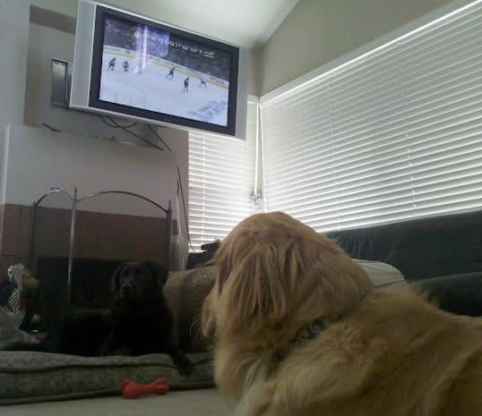 Apache watching the LA Kings