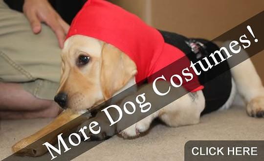 More Dog Halloween Costumes