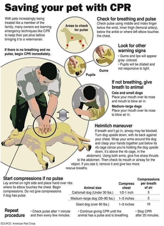 Dog CPR
