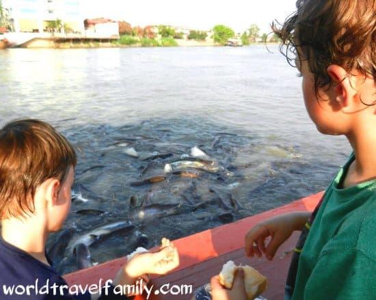 feeding fish ayutthaya river thailand