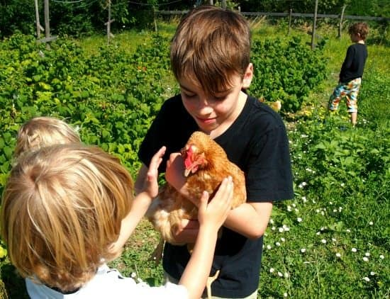 Child friendly villa. Organic farm and chickens. World Travel Family travel blog.
