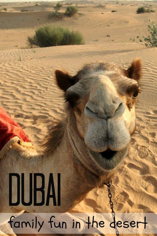 Dubai Desert Safari with Camel Riding for families.