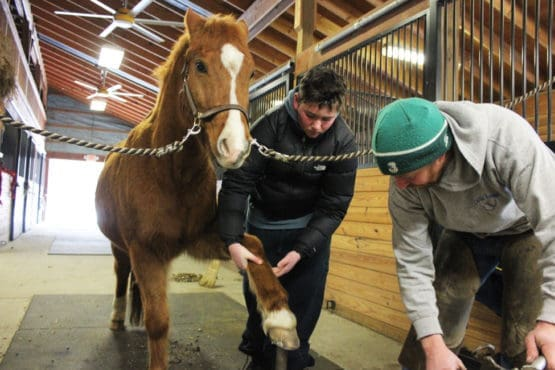 Green Chimneys students learn what it's like to be a farrier