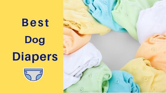 best dog diaper reviews