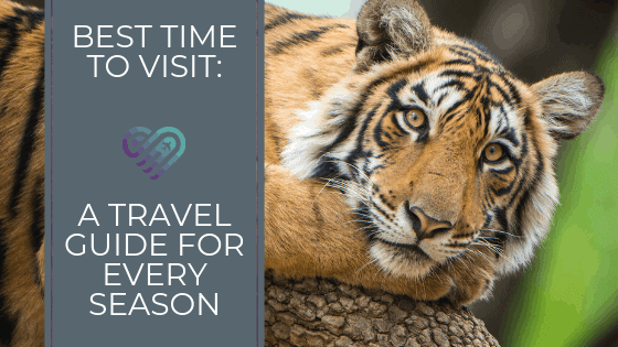 Best Time to Visit: A Travel Guide for Every Season [Infographic]