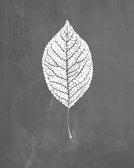 Chalkboard Leaf Printable