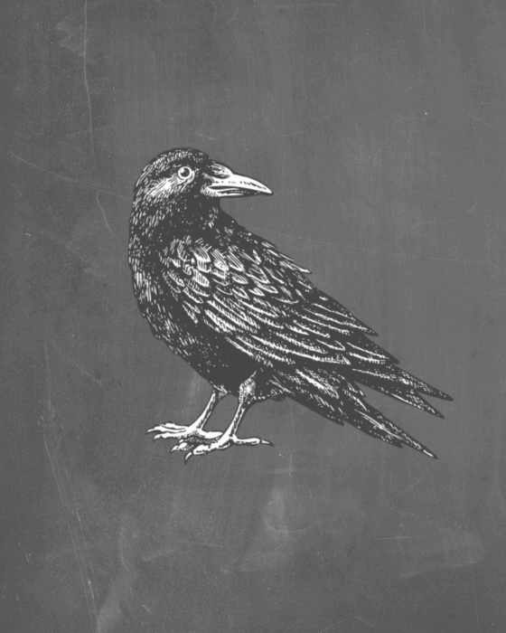 Halloween Raven printable