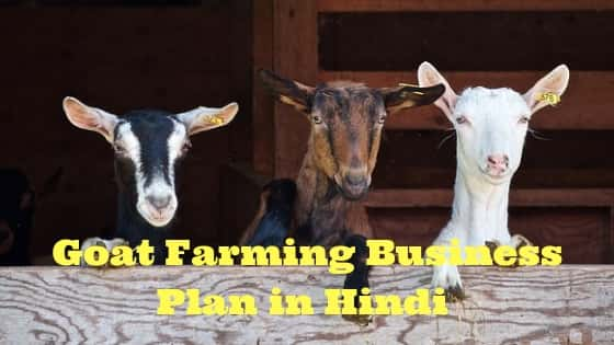 goat farming business plan in hindi