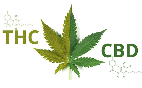 Internationale Ontwikkelingen Rond CBD En Cannabis