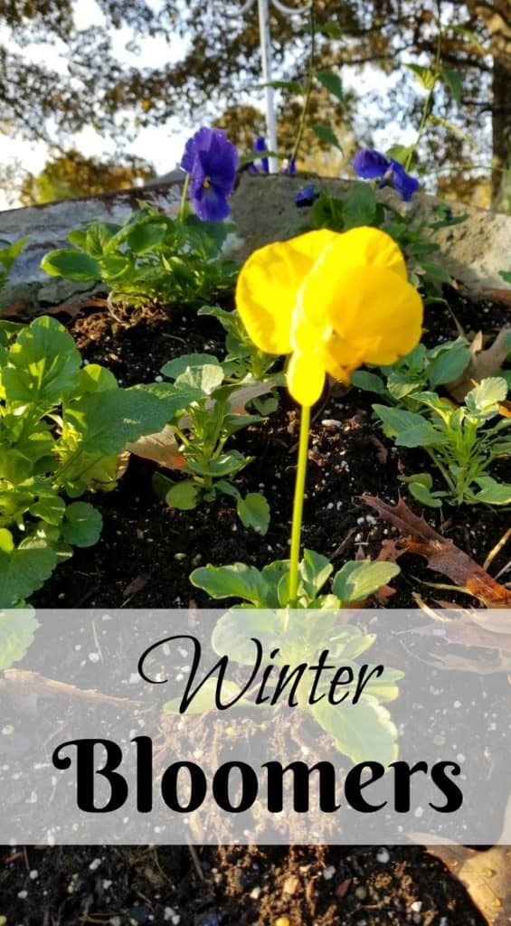 Winter Blooming Plants