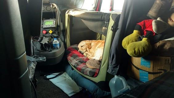 Noz2Noz Sof-Krate - Puppy Sleeping
