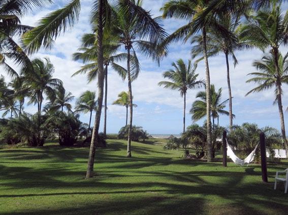 Rede coqueiro
