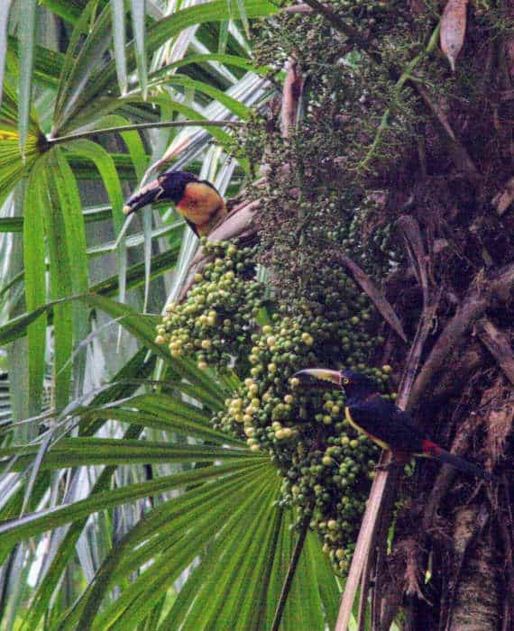 Wildlife in Yaxha - Birds