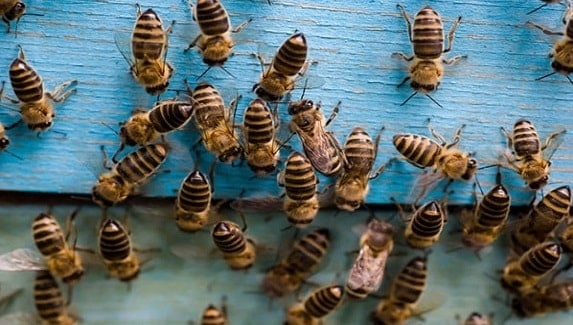 A Growing Hive