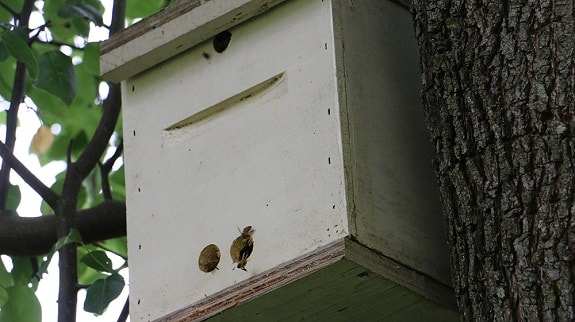 Swarm Bait Hive in Tree