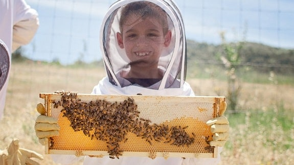 First Time Beekeeper