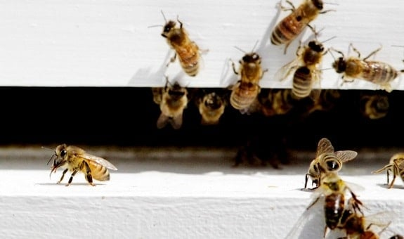 Everything to Know About Queenless Beehives