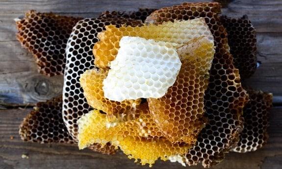 Honey Comb and Brood Comb