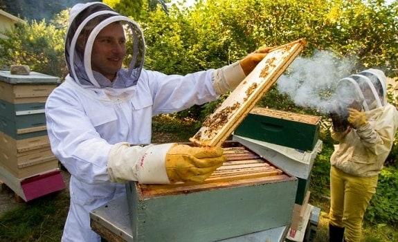 beginner beekeeping mistakes