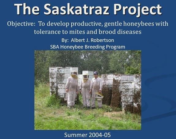 The Saskatraz Bee Project