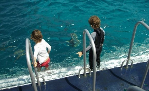 snorkelling on the great barrier reef from Port Douglas