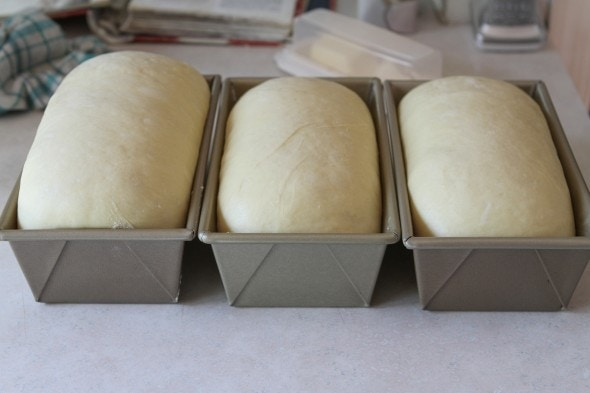 risen egg bread loaves