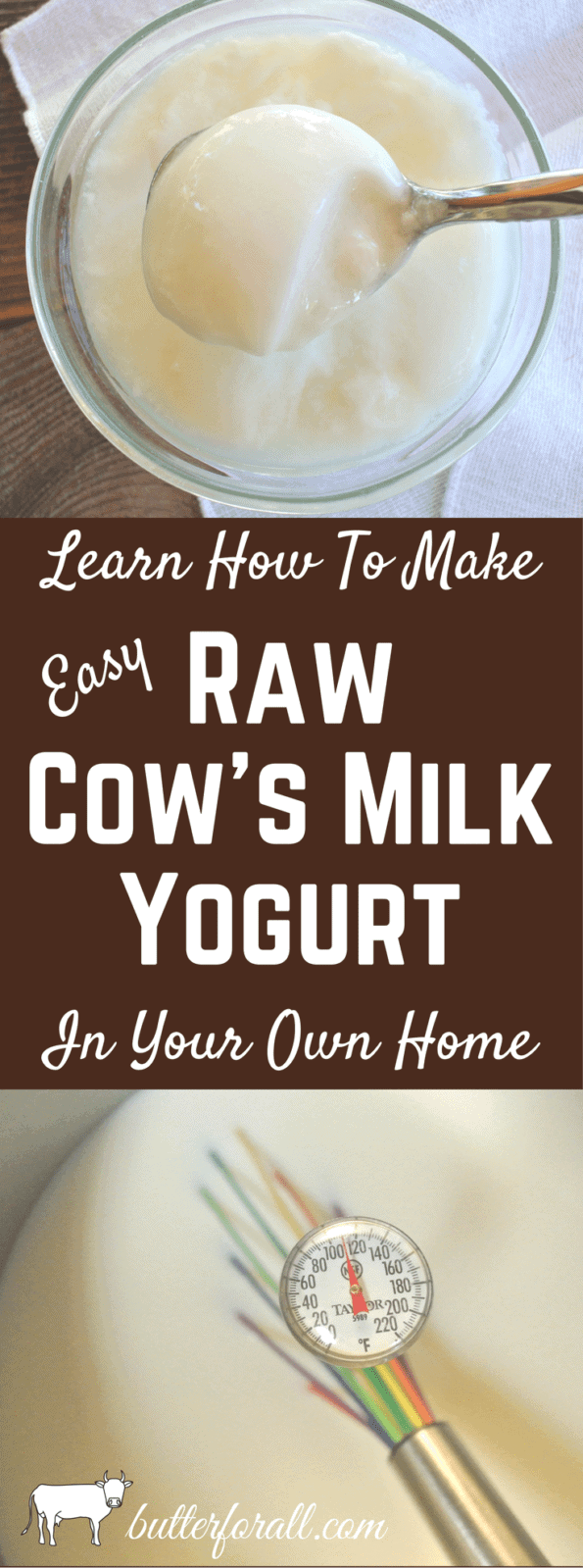 Learn To Make Easy Raw Cow's Milk Yogurt