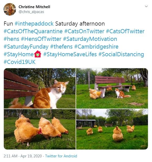 Farm animals keeping distance