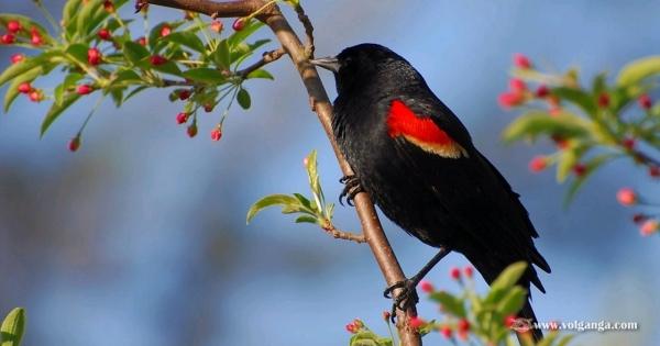 amazing-birds-07
