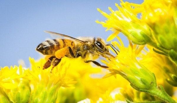 Environmental Benefits of Beekeeping