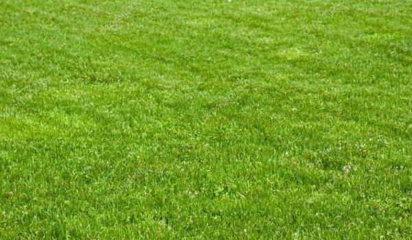 Lawn maintenance for beautiful green grass