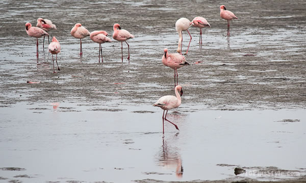 pink flamingoes on the beach | 40plusstyle.com