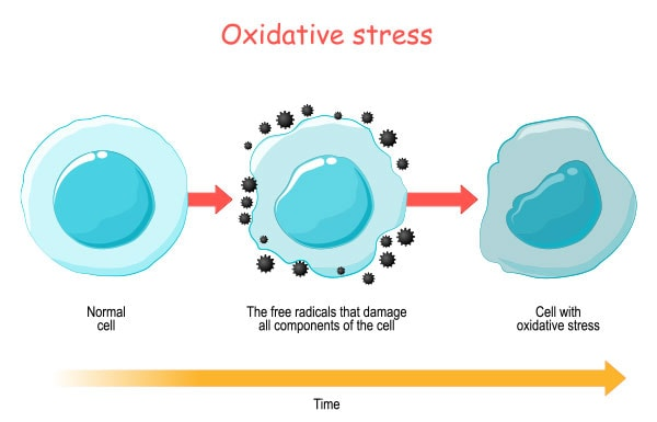 All you need to know about Oxidative stress and Inflammation