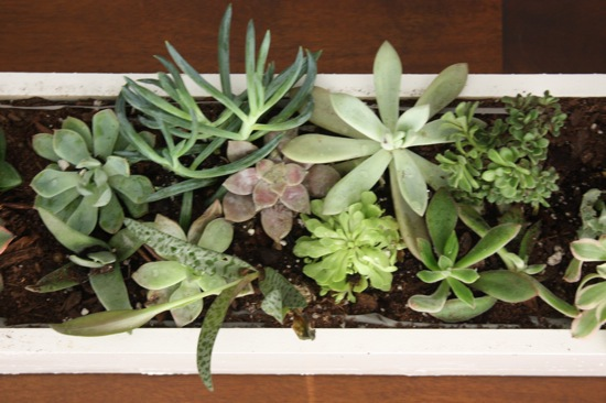 Succulent centerpieces tips and tricks