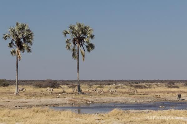 Two Palms waterhole in Etosha Park Namibia, Africa   40plusstyle.com