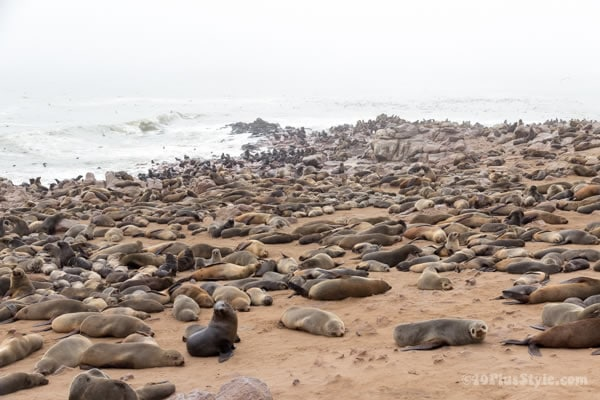 Seals at Cape Cross Reserve | 40plusstyle.com