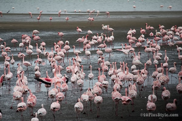 Pink flamingoes | 40plusstyle.com