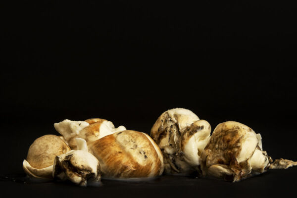 treccia di mozzarella di bufala affumicata abbuffa