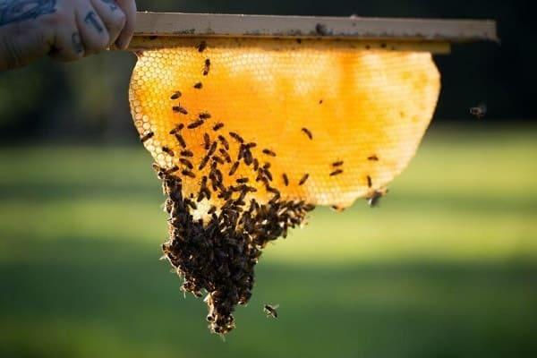Benefits of Beekeeping