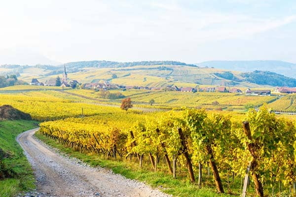 Tour the famous Wine Route in Alsace from Strasbourg