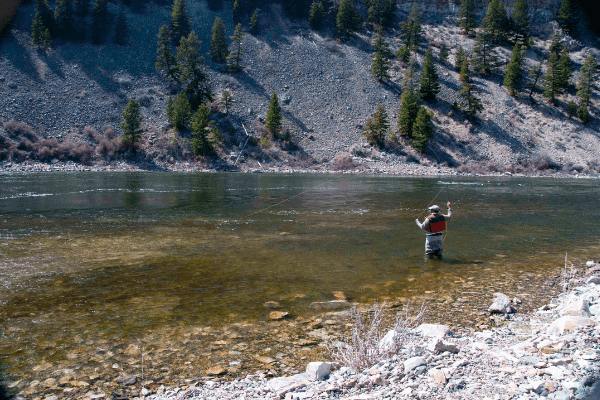Fly fishing guide and expert Duke Brown casting in Yellowston National Park Montana
