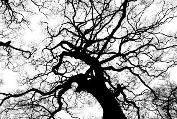 immagine monocromatica, guida definitiva al bianco e nero |Foto in bianco e nero