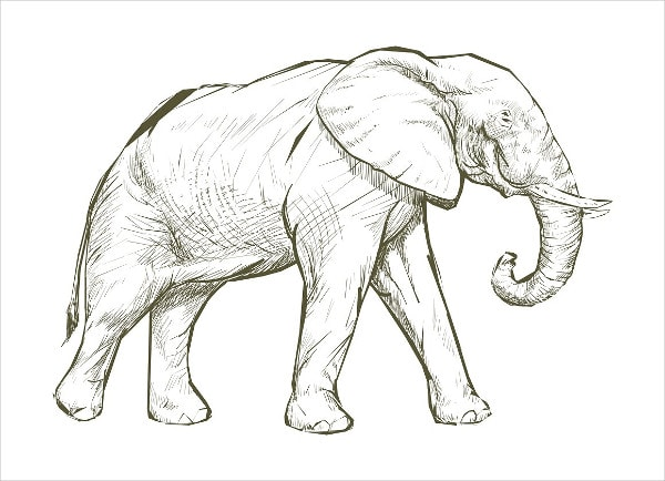 Illustration Drawing of Elephant