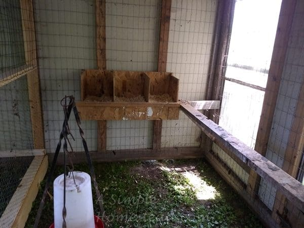 nesting boxes for grown hens