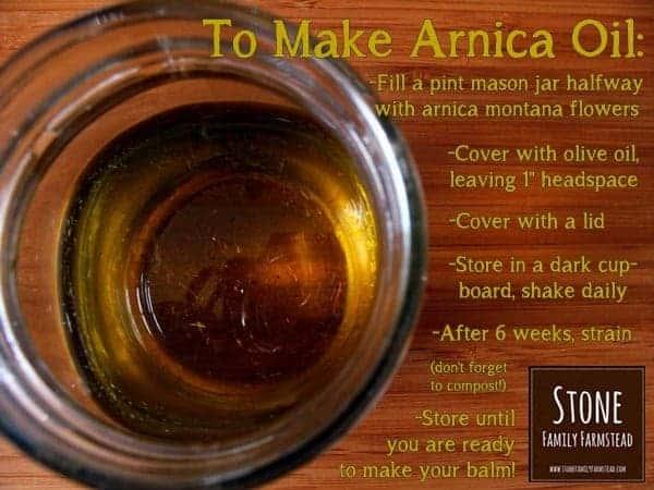 How to Make Arnica Oil - Stone Family Farmstead