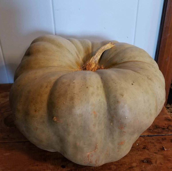 Pale Green Pumpkin