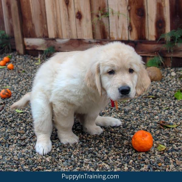 Who picks up Guide Dog poop?