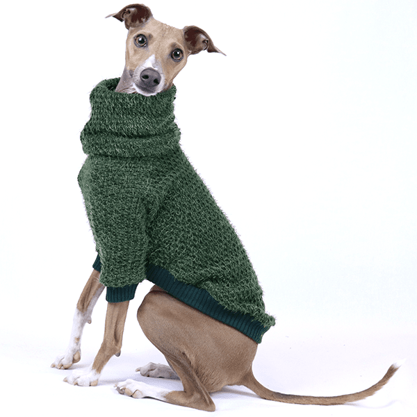 Italian Greyhound Clothing | Royal Hound | Iggy Clothing